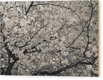 Under The Cherry Tree - Bw Wood Print by Hannes Cmarits