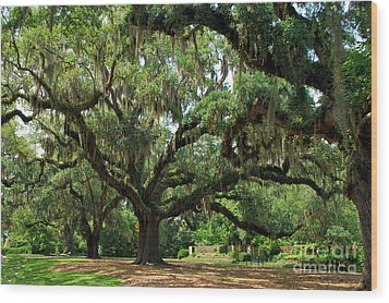 Wood Print featuring the photograph Under The Oaks by Bob Sample