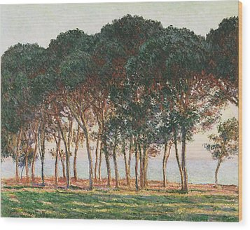 Under The Pines. Evening Wood Print by Claude Monet