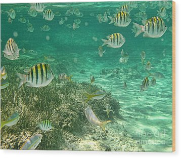 Under The Sea Wood Print by Peggy Hughes