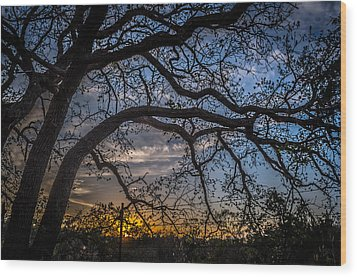 Under The Tree And Through The Fence Wood Print by Kelly Kitchens
