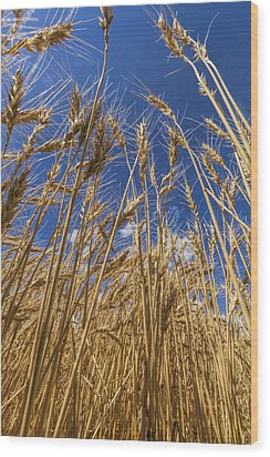 Under The Wheat Wood Print