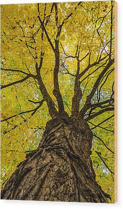 Under The Yellow Canopy Wood Print by Debra Martz