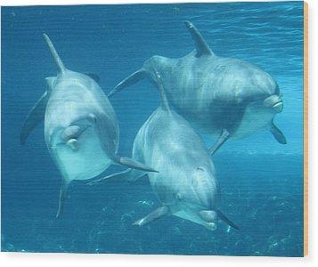 Underwater Dolphin Encounter Wood Print