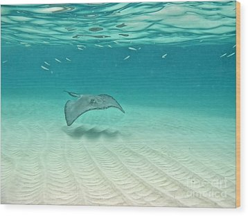 Underwater Flight Wood Print by Peggy Hughes