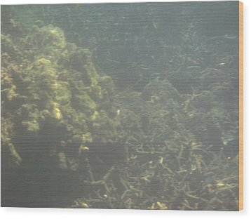 Underwater - Long Boat Tour - Phi Phi Island - 011338 Wood Print by DC Photographer