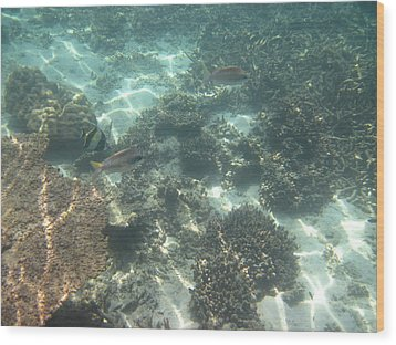 Underwater - Long Boat Tour - Phi Phi Island - 011377 Wood Print by DC Photographer