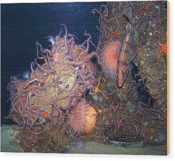 Wood Print featuring the photograph Underwater Sea Life by Christine Drake
