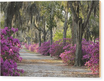 Unpaved Road With Azaleas And Oaks Wood Print by Bradford Martin