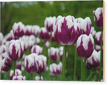 Unusual Tulips Wood Print by Jennifer Ancker