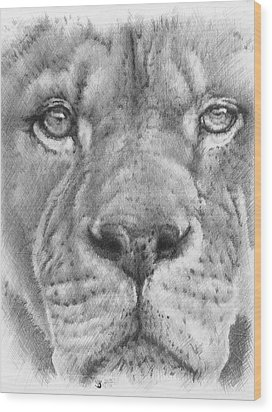 Up Close Lion Wood Print by Barbara Keith