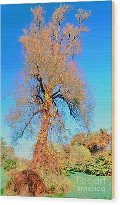 Up Rooted Tree Wood Print by Kathleen Struckle