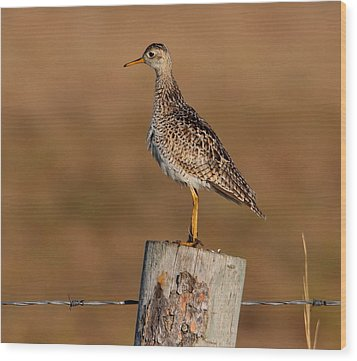Upland Sandpiper Wood Print by Larry Trupp