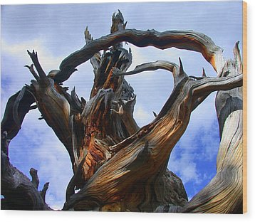 Uprooted Beauty Wood Print by Shane Bechler