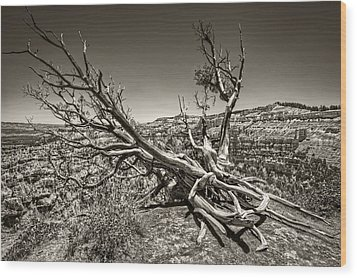 Wood Print featuring the photograph Uprooted - Bryce Canyon Sepia by Tammy Wetzel
