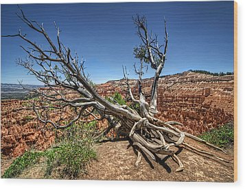 Wood Print featuring the photograph Uprooted - Bryce Canyon by Tammy Wetzel
