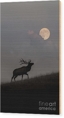 Upwardly Mobile - Yellowstone National Park Wood Print by Sandra Bronstein