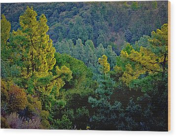 Wood Print featuring the photograph Urban Forrest by Joseph Hollingsworth