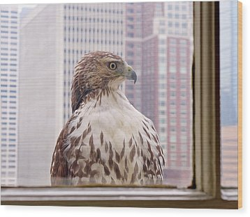 Urban Red-tailed Hawk Wood Print by Rona Black