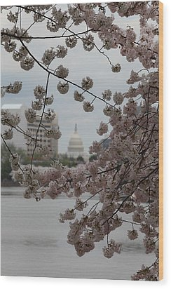 Us Capitol - Cherry Blossoms - Washington Dc - 01133 Wood Print by DC Photographer