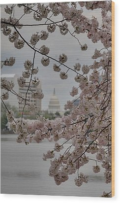 Us Capitol - Cherry Blossoms - Washington Dc - 01135 Wood Print by DC Photographer