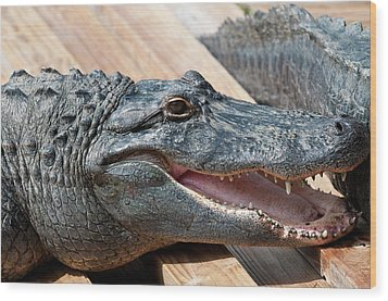 Usa, Florida Gatorland, Florida Wood Print by Michael Defreitas
