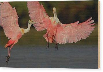 Usa, Florida, Tampa Bay, Alafaya Banks Wood Print