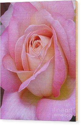 Valentine Pink Rose Bud Wood Print by Paul Clinkunbroomer