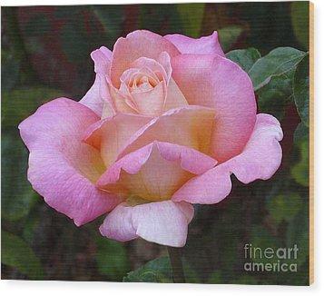 Valentine Pink Rose Wood Print by Paul Clinkunbroomer