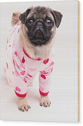 Valentine's Day - Adorable Pug Puppy In Pajamas Wood Print by Edward Fielding