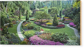 Vancouver Butchart Sunken Gardens Beautiful Flowers No People Panorama Wood Print by David Zanzinger
