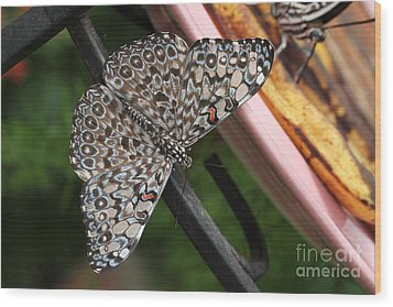 Wood Print featuring the photograph Variable Craker Butterfly #2 by Judy Whitton