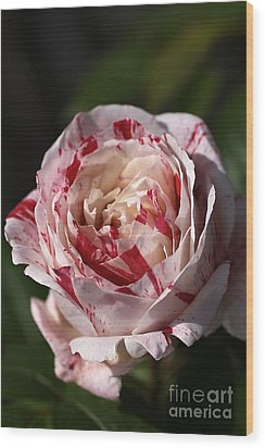 Wood Print featuring the photograph Variegated Rose by Joy Watson