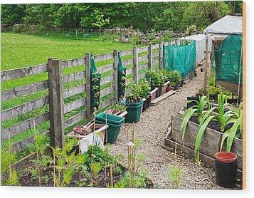Vegetable Garden Wood Print by Tom Gowanlock
