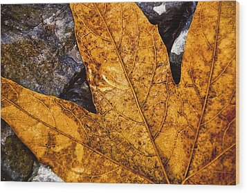 Wood Print featuring the photograph Veins by Anthony Citro