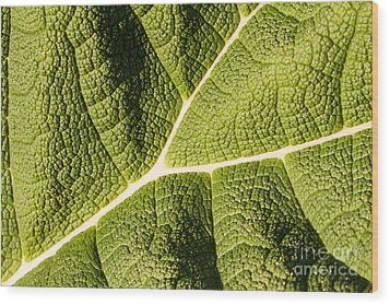 Veins Of A Leaf Wood Print