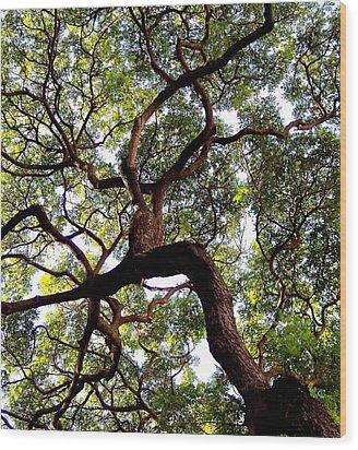 Veins Of Life Wood Print by Karen Wiles