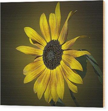 Velvet Queen Sunflower Wood Print