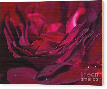 Velvet Red Rose Wood Print