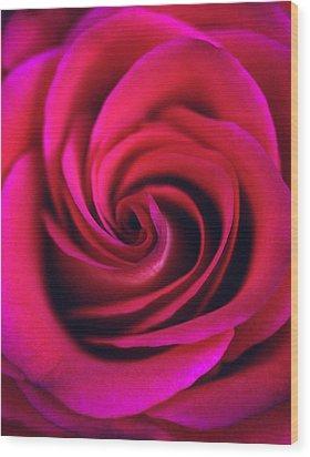Velvet Rose Wood Print by Kathy Yates