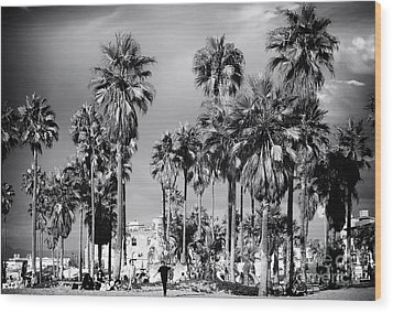 Venice Beach Palms Wood Print by John Rizzuto