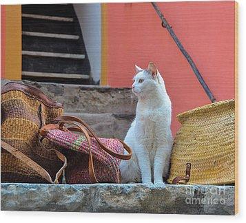 Vernazza Shop Cat Wood Print
