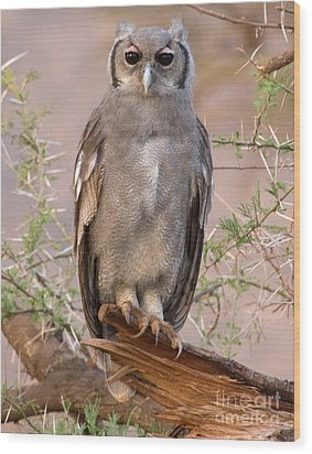 Wood Print featuring the photograph Verreaux Eagle-owl by Chris Scroggins