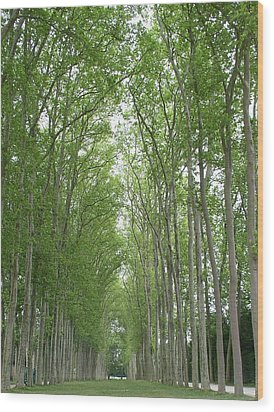 Wood Print featuring the photograph Versailles Tree Garden 2005 by Cleaster Cotton