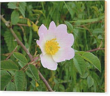 Vert Jaune Rose Wood Print