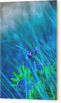 Wood Print featuring the photograph Vetch In Blue by Adria Trail