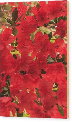 Wood Print featuring the photograph Vibrant Azalea by Patricia Schaefer