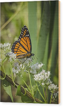 Wood Print featuring the photograph Viceroy 2 by Bradley Clay
