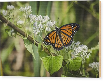 Wood Print featuring the photograph Viceroy Butterfly by Bradley Clay