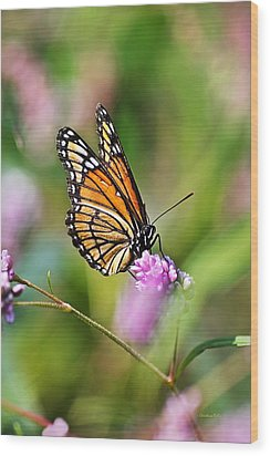 Viceroy Butterfly Wood Print by Christina Rollo